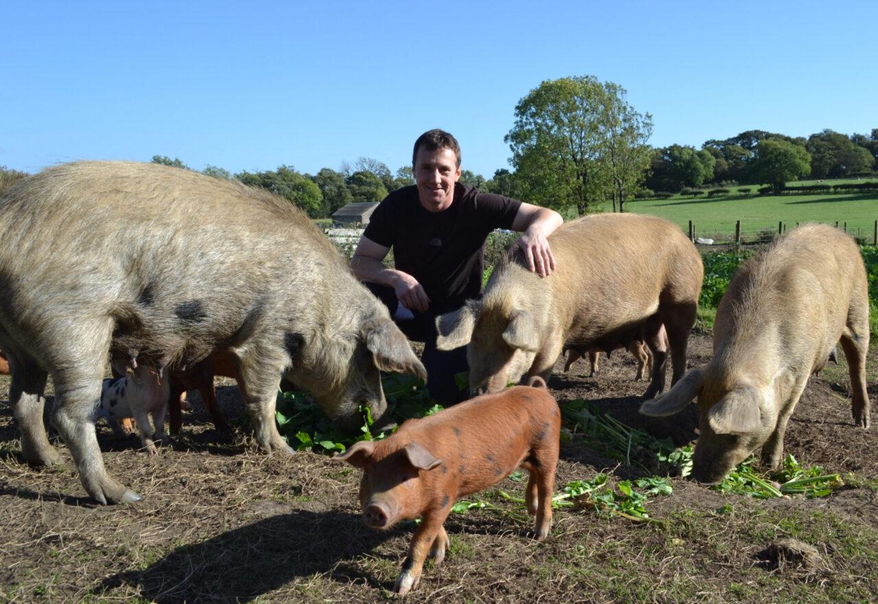 Simon Hare Organic Pigs