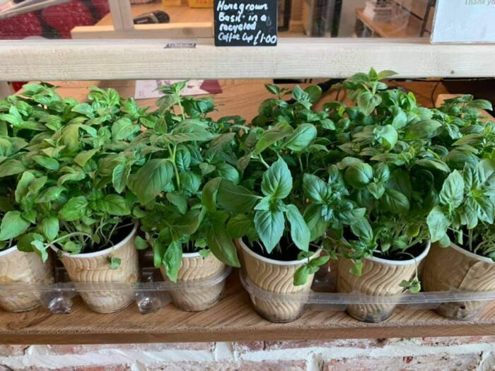 Basil pots