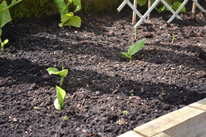 Turmeric Growing Greenhouse