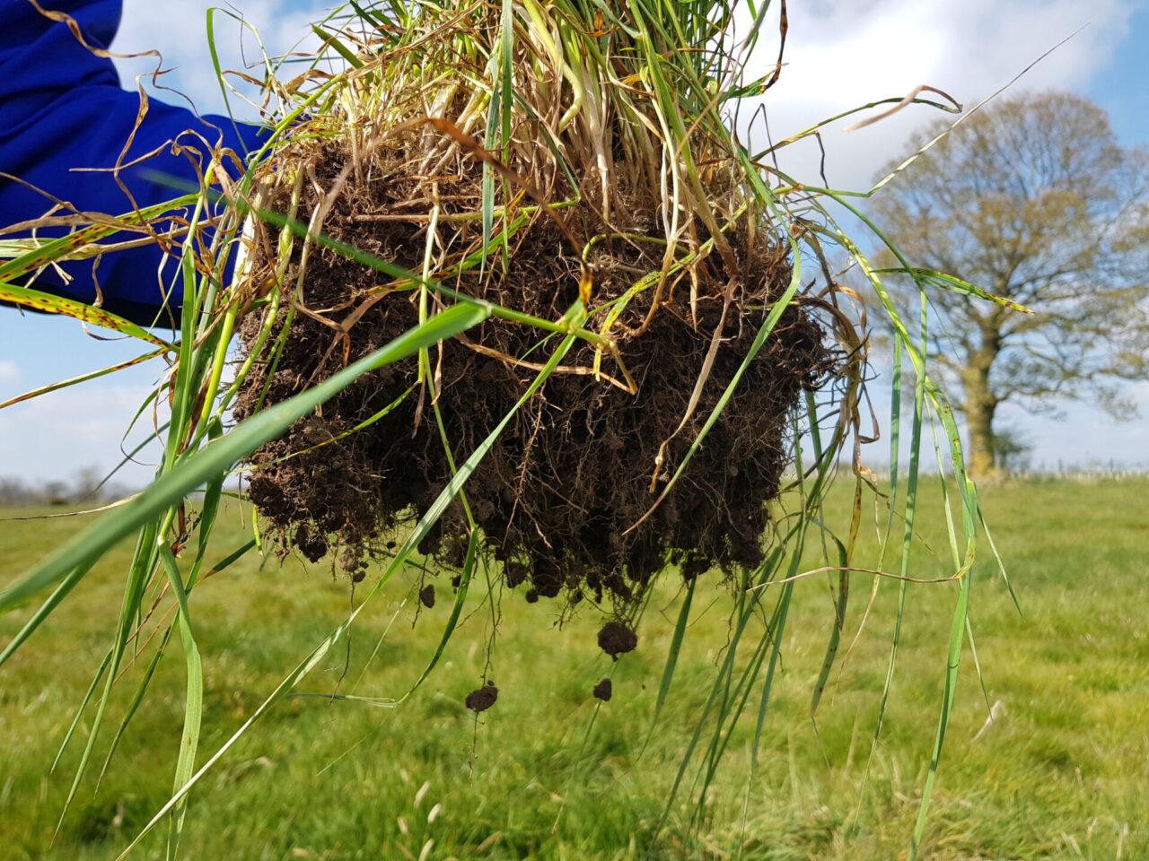 Soil roots