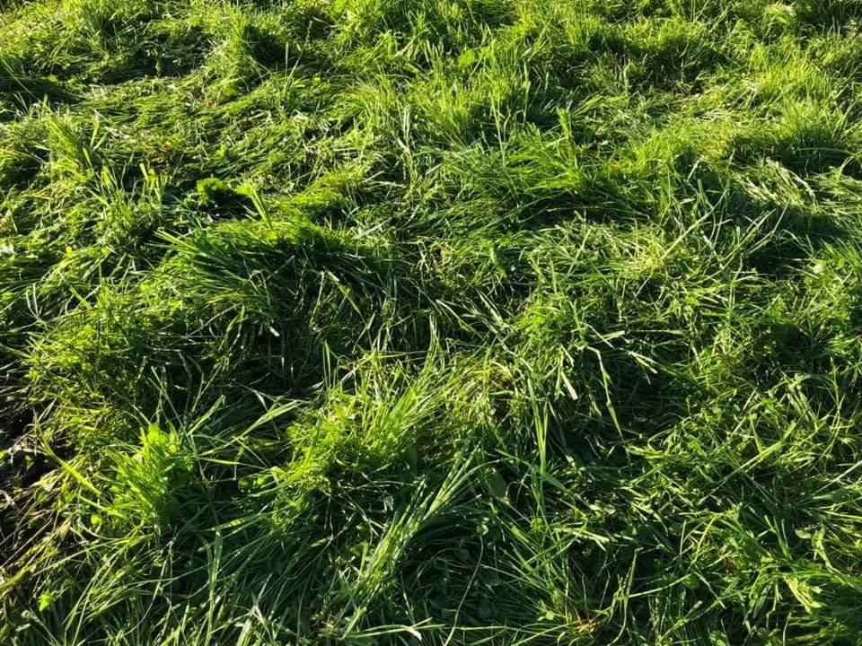 Grass Sward